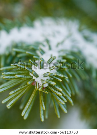 Snow Covered Pine Tree Branches Close Up - stock photo