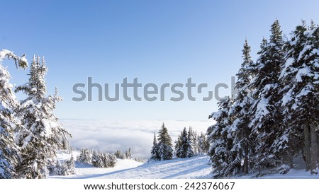 Snow covered pine trees in the high alpine of Western Canada - stock photo