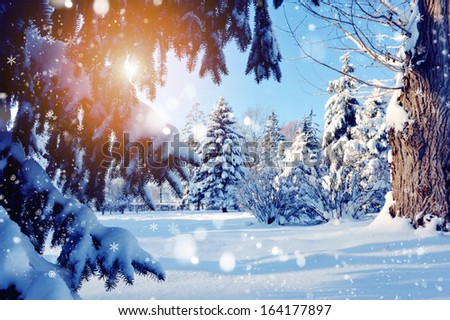 Snow-covered tree branch at sunset - stock photo