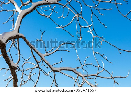 Snow covered tree branches - stock photo