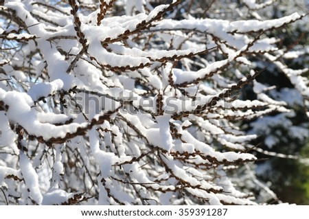 Snow-covered tree branches. - stock photo