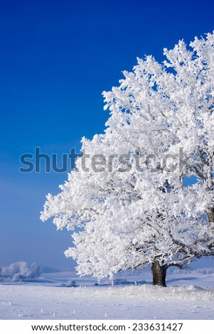 Snow covered tree on a cold sunny winter day - stock photo
