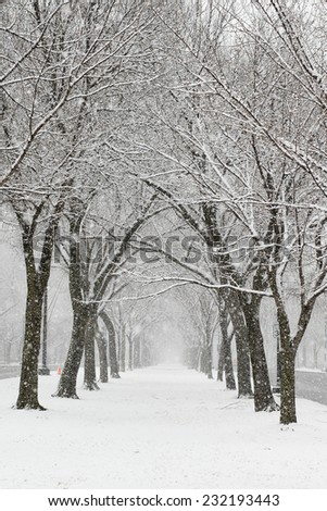Snow covered trees and alley - Washington DC, United States - stock photo