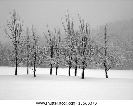 Snow covered trees in a midst of a blizzard, horizontal - stock photo