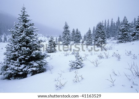 Snow covered trees in the Canadian Rockies. Banff National Park. Alberta Canada - stock photo