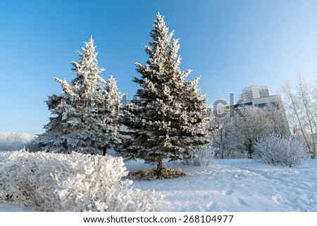 Snow-covered trees in the city of a  Moscow, Russia - stock photo