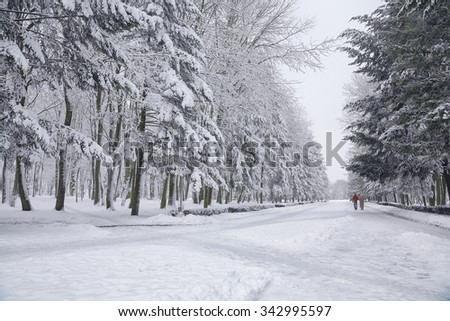 Snow-covered trees in the city park. Couple on a walk - stock photo