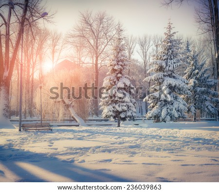 Snow-covered trees in the city park. Winter sunrise. Retro style. - stock photo
