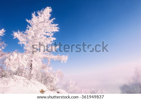 Snow-covered trees in the mountains at sunset. Beautiful winter landscape. - stock photo