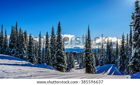 Snow covered Trees surrounding the ski slopes at the village of Sun Peaks in the Shuswap Highlands of Central British Columbia under Blue Skies - stock photo
