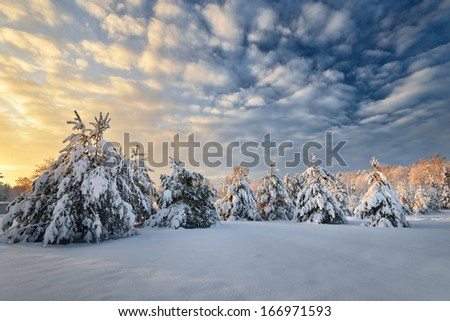 Snow covered winter forest in Latvia - stock photo