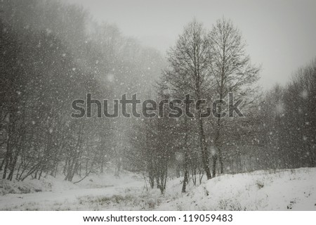 snow covering trees and ground in winter landscape - stock photo
