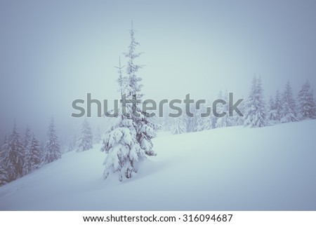 Snow drifts in the winter woods. Christmas landscape with fog. Color toning. Low contrast - stock photo