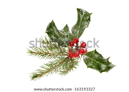 Snow dusted holly and pine needles isolated against white - stock photo