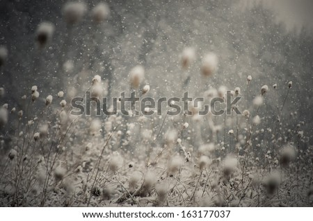 snow falling and covering the ground - stock photo