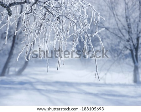 snow flakes on a branch outside in winter - stock photo