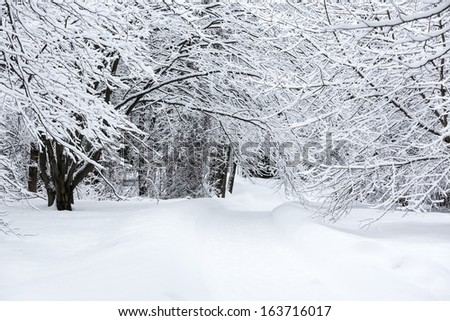 Snow footpath through frozen beech forest - stock photo