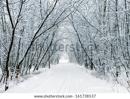 Snow forest alley - stock photo