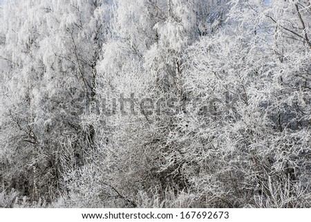 Snow forest background - stock photo