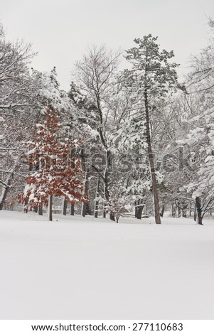 Snow from the previous day sticking to the branches of trees gives the landscape at St. Louis Forest Park a fresh, winter-like appearance after the onset of the spring season. - stock photo