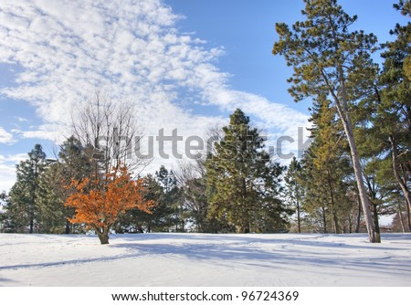 Snow in the Forest Forest in Illinois after a heavy snow. - stock photo