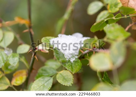 Snow on leaves - stock photo