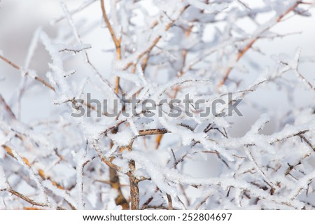 snow on the branches of a tree - stock photo
