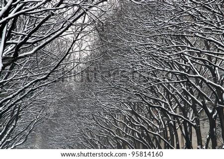 Snow over trees - stock photo