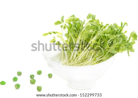 Snow Pea Sprouts  in white bowl with green pea - stock photo