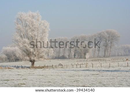 snow white winter - stock photo
