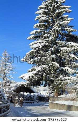 Snowboarders walk through a beautiful scenic landscape of snow covered trees alongside a snowy road in a mountainous, alpine setting. - stock photo