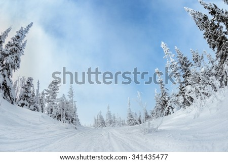 Snowmobile road between beautiful snowy fir trees at winter season - stock photo
