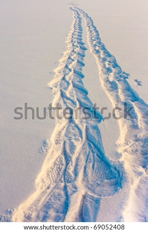 Snowshoe prints forming a trail in untouched powder sow surface coming from far away. - stock photo