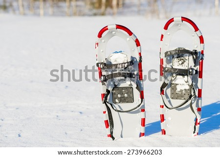 snowshoes are standing upright in the snow - stock photo