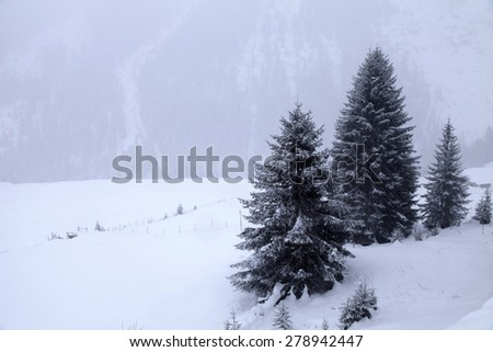 snowstorm over mountains and spruce trees in winter, Alps, Switzerland - stock photo