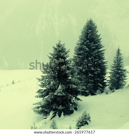snowstorm over mountains and spruce trees in winter, Alps, Switzerland. Square toned image, instagram effect - stock photo