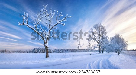 Snowy alley in the winter - stock photo