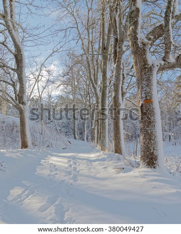 Snowy alley of trees a sunny winter day. Footsteps in the snow. - stock photo
