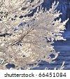 Snowy branch background - stock photo
