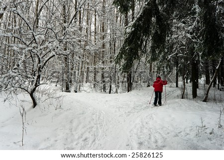 snowy day  in winter forest - stock photo