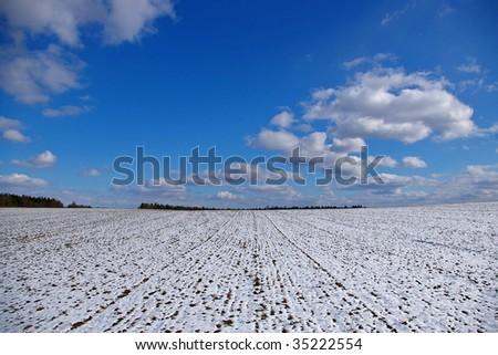 snowy field - stock photo