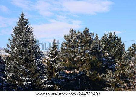 Snowy fir trees over cloudy blue sky  - stock photo