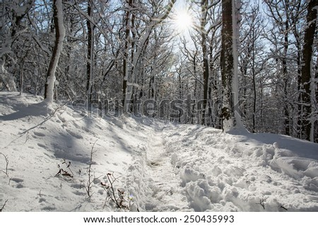 Snowy footpath in winter white forest. Sunny scene. - stock photo