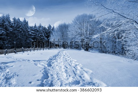 Snowy forest at moonlight in winter in Italy - stock photo