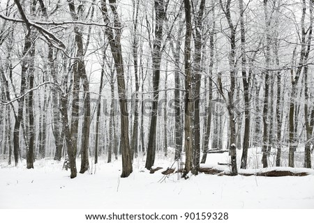 Snowy forest in winter - stock photo