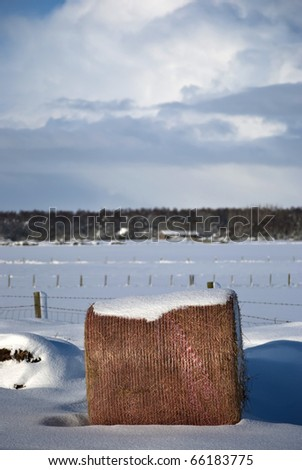 Snowy Hay Bale - stock photo