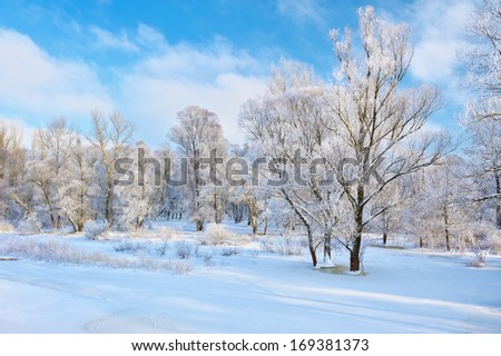 Snowy landscape by the Narew river valley with bare trees. Beautiful winter. - stock photo