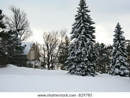 Snowy landscape with tall pine trees - stock photo