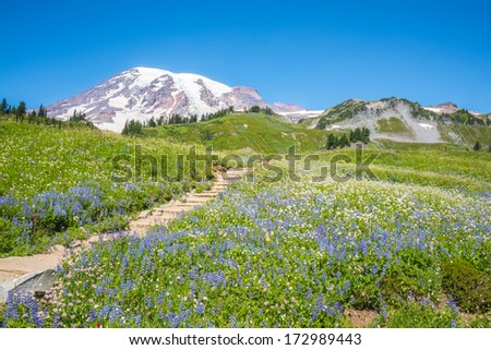 Snowy Mountain Peak and Field of Wildflowers along hiking trail. Copy space. - stock photo