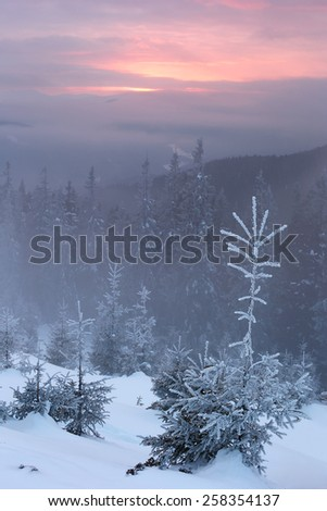snowy mountains Karpaty in winter evening light amber - stock photo